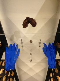 The mutant rubber and the rubber gloves to handle it