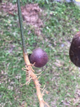 a seed still attached to the seedling